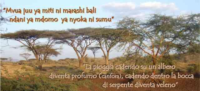 Mvua juu ya miti ni marashi bali